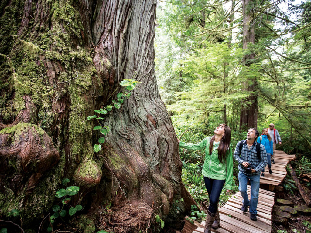 Big Tree Trail Tofino