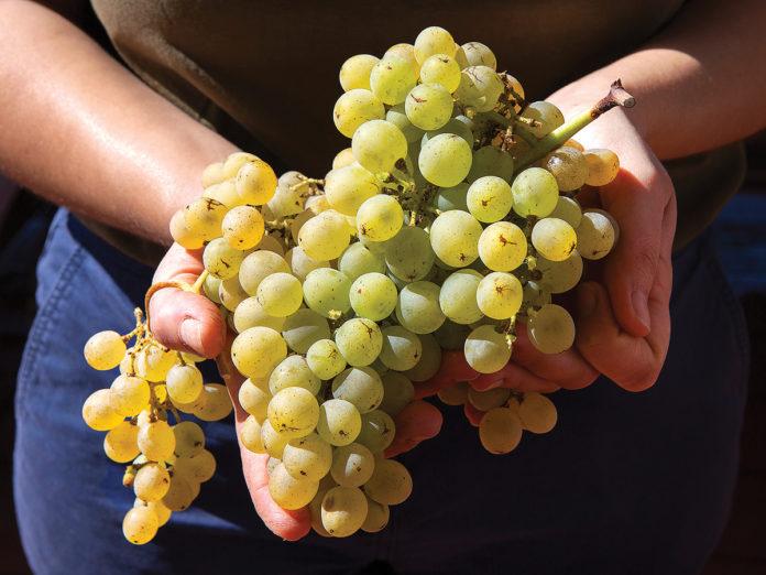 Handful of grapes